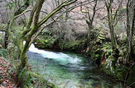 Free picture: water, wood, nature, river, stream
