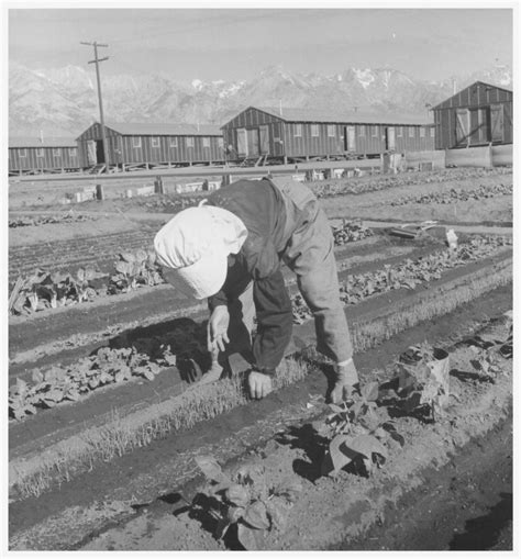 Japanese Internment Camps War Relocation Authority Photos