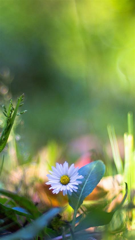mm92-green-lawn-flower-bokeh-nature - Papers