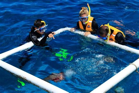 Cairns Snorkelling Tours, Great Adventures - Great Barrier