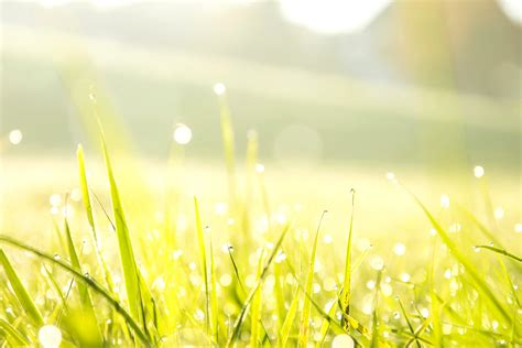 Free picture: morning, dew, grass, meadow, plant, sky, sun